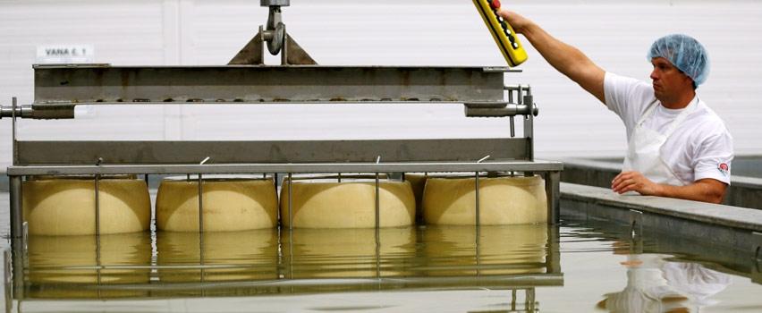 Как открыть производство сыра думаешь, следует