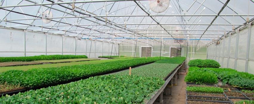 Технологии круглогодичного выращивания клубники в домашних условиях