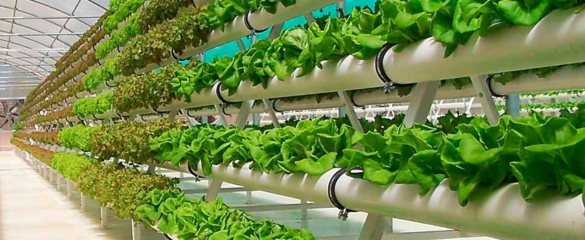 Выращивание зелени в теплицах как бизнес 39